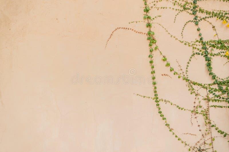 Pomarańczowa betonowej ściany tekstura fotografia stock