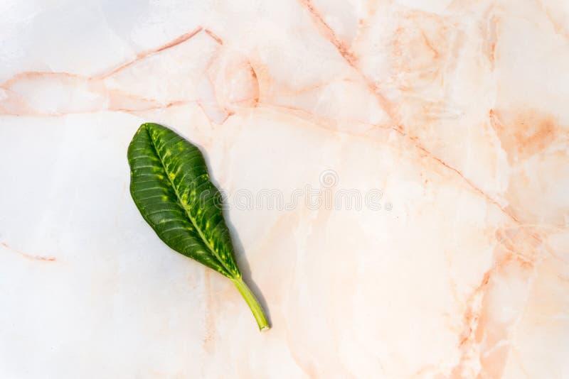 Pomarańczowa bielu marmuru tekstura z Małym Zielonym liścia tłem fotografia stock