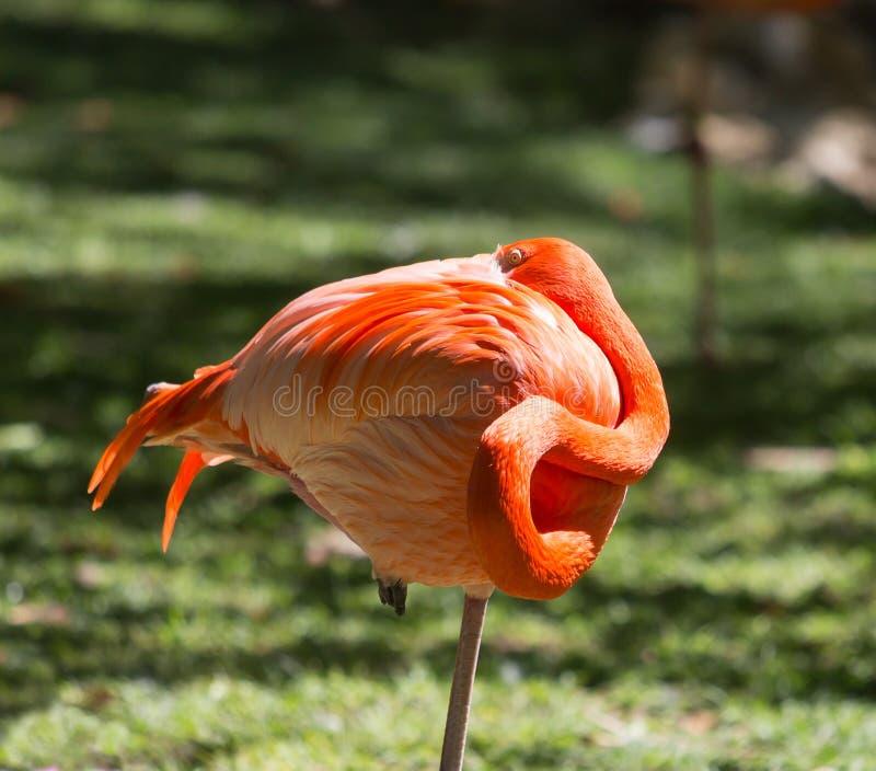 Pomarańczowa flaming piłka obraz stock