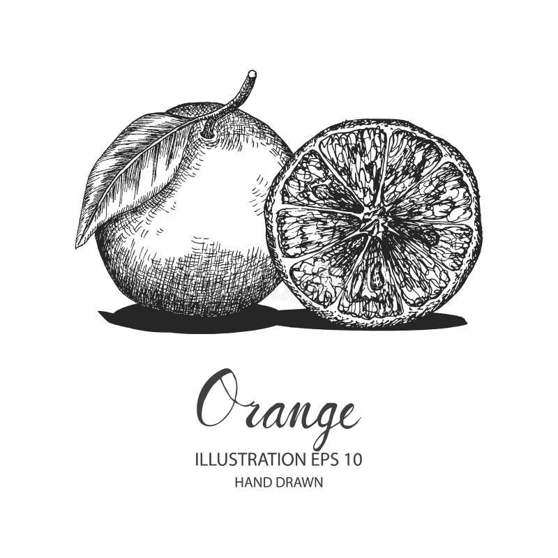 Pomarańczowa ręka rysująca ilustracja atramentem i pióro kreślimy ilustracji