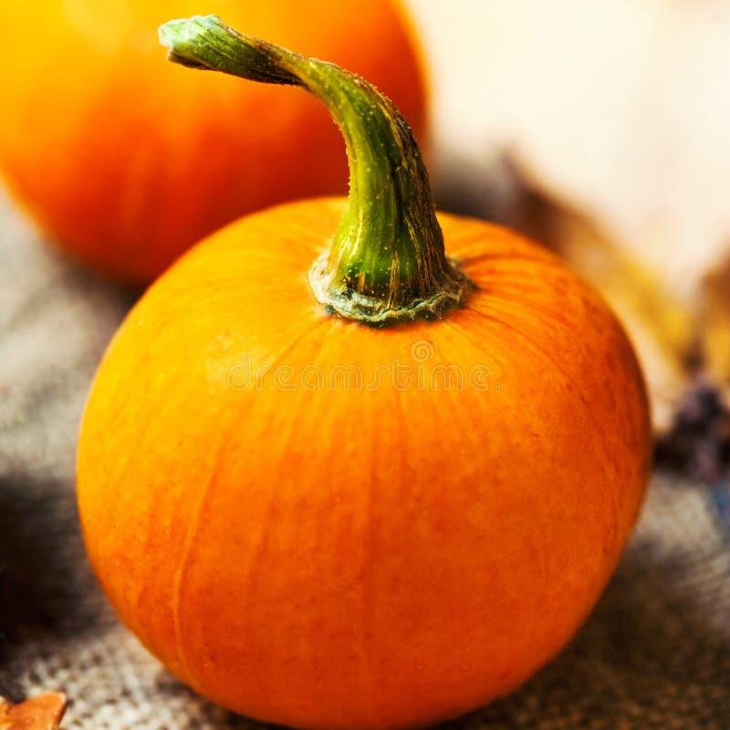 Pomarańczowe banie nad drewnianym stołem Szczęśliwy dziękczynienie dnia backgr zdjęcie stock