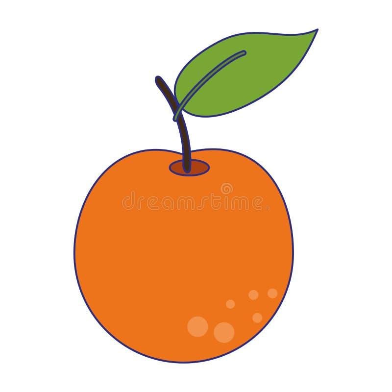 Pomarańczowe owocowe świeża żywność niebieskie linie ilustracji