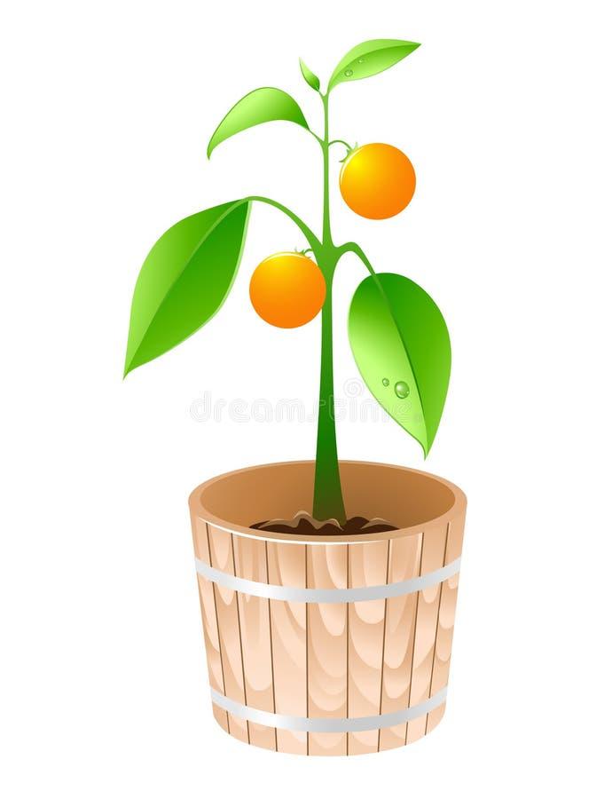 pomarańczowego drzewa balia drewniana ilustracji