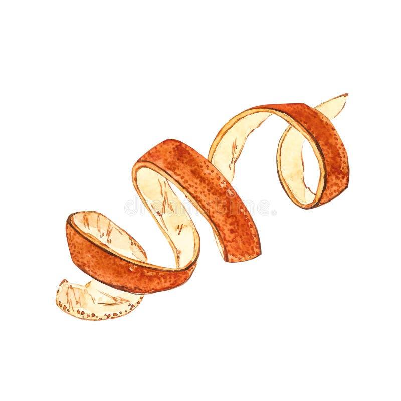 Pomarańczowej łupy akwareli botaniczna ręka rysować ilustracje royalty ilustracja