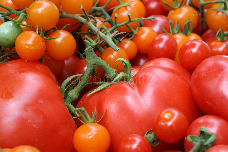 pomarańczowej czerwieni pomidory zdjęcie stock