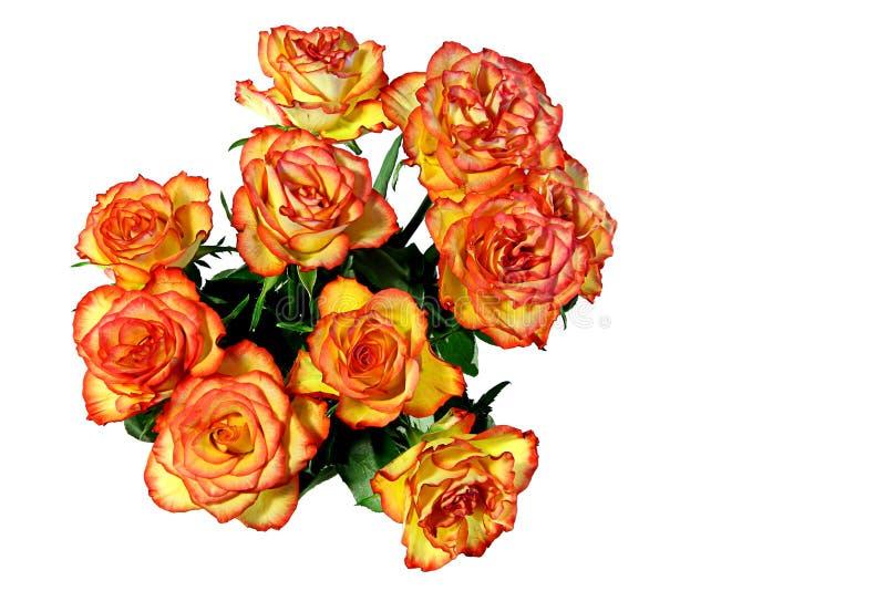 pomarańczowej czerwieni róże zdjęcia stock