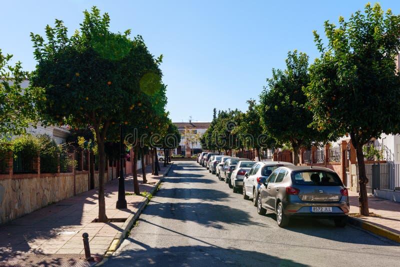Pomarańczowi drzewa uliczni z parkującymi samochodami fotografia royalty free