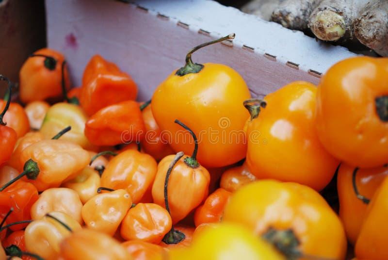 Pomarańczowi habanero pieprze wystawiający w uprawiają ziemię rynek obraz royalty free