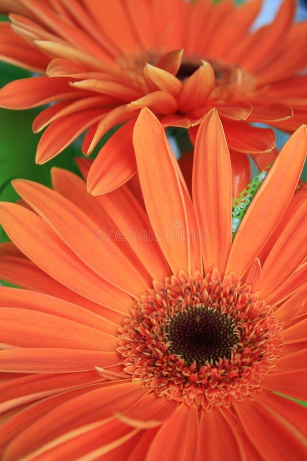 Pomarańczowi kwiaty fotografia royalty free