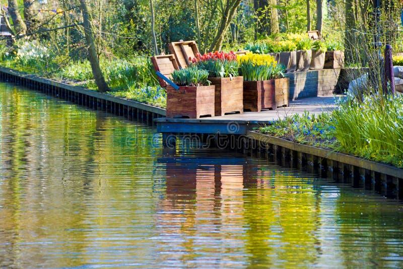 Pomarańczowi tulipany i żółci daffodils w drewnianych pudełkach przed kolorową odbija wodą fotografia stock