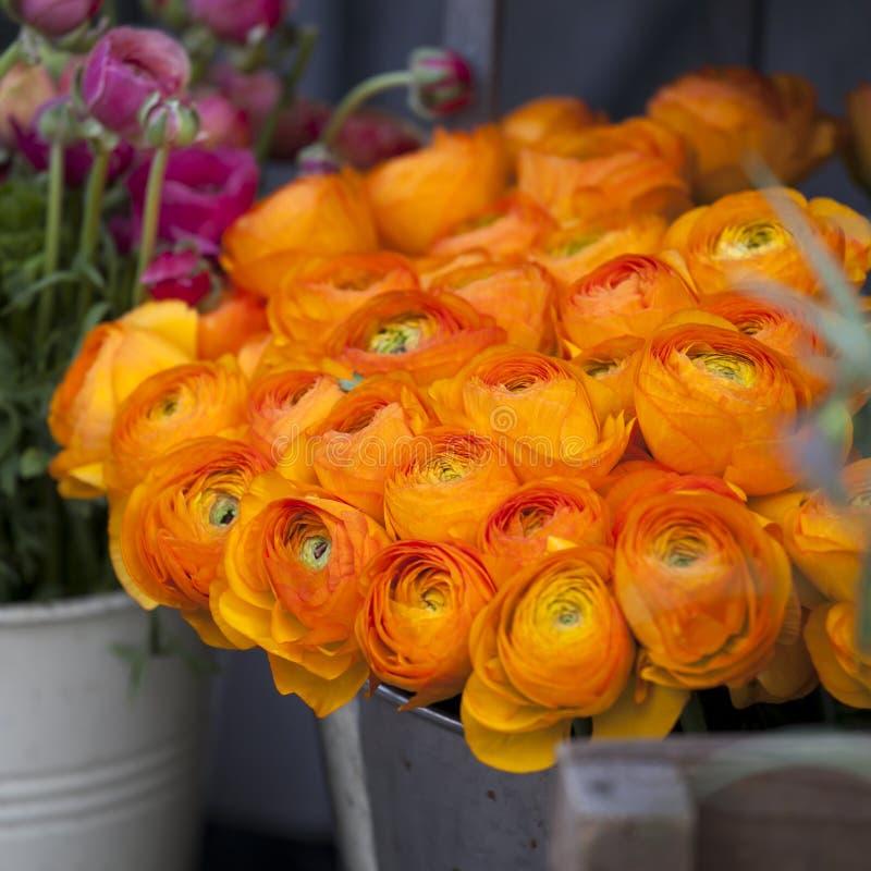 Pomarańczowy łubin dla sprzedaży Perski jaskier kwitnie (ranunculus) obraz royalty free