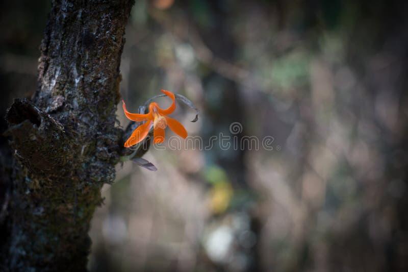 Pomarańczowy dziki kwiat w ciemnym brzmienia środowisku fotografia royalty free