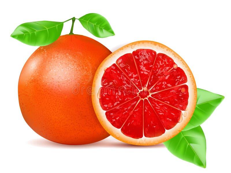 Pomarańczowy grapefruitowy z liściem odizolowywającym na białym tle również zwrócić corel ilustracji wektora ilustracji