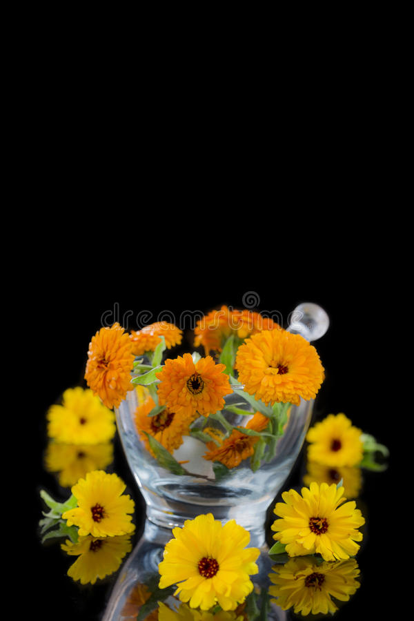 Pomarańczowy i żółty Calendula kwitnie w szklanym moździerzu na czerni zdjęcie stock