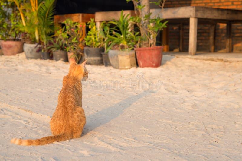 Pomarańczowy kot kwiatu garnkiem Tropikalna wyspa piaska plaży scena Urlopowa podróż z zwierzętami domowymi fotografia stock