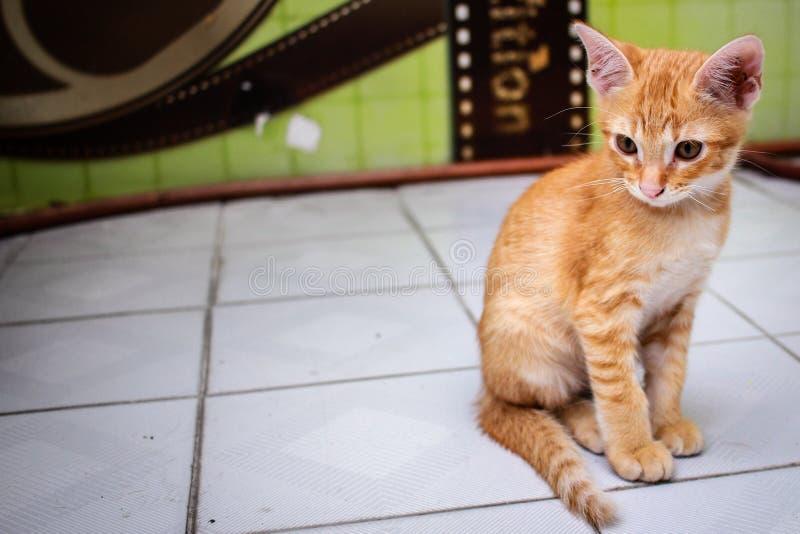 Pomarańczowy kot siedzi na podłoga obraz royalty free