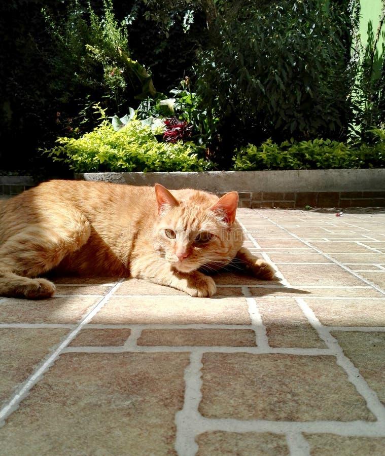 Pomarańczowy kot w kwiatu ogródzie fotografia royalty free
