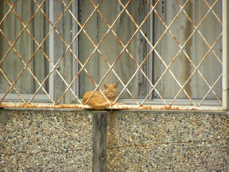 Pomarańczowy kot w okno zdjęcia stock