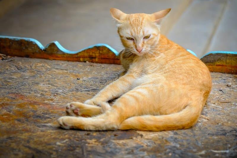 Pomarańczowy kota lying on the beach i był śpiący fotografia royalty free