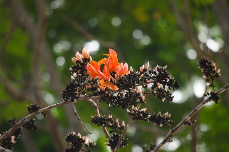 Pomarańczowy kwiat w naturze zdjęcie royalty free