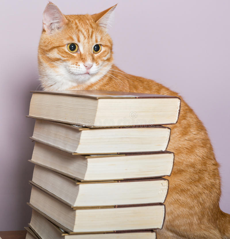 Pomarańczowy pasiasty kot i książki obrazy stock