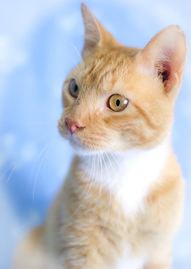 Pomarańczowy Tabby kot Morris zdjęcia stock