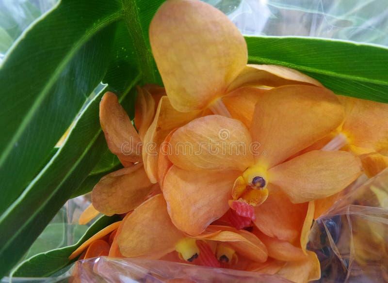 Pomarańczowy Vanda orchidei bukiet zdjęcia royalty free
