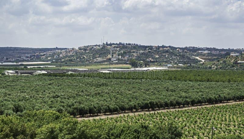 Pomares israelitas e Vinyard com a cidade palestina no fundo fotos de stock royalty free