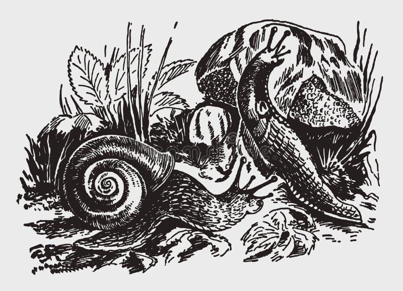 Pomatia de la hélice del caracol comestible y ater negro del Arion de la barra que se arrastran sobre las plantas y las rocas libre illustration