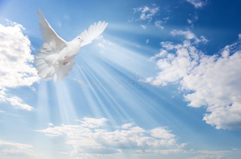 Pomba branca contra o céu azul com nuvens brancas imagens de stock