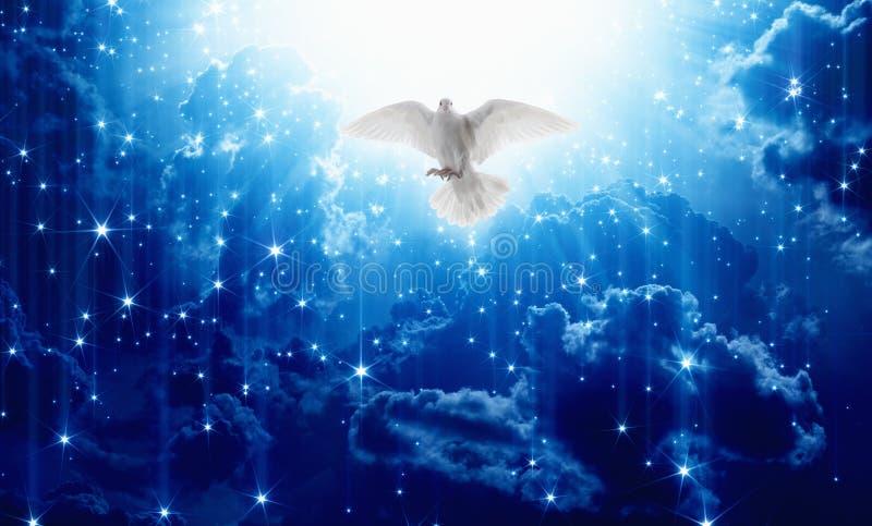 A pomba branca desce dos céus fotografia de stock royalty free