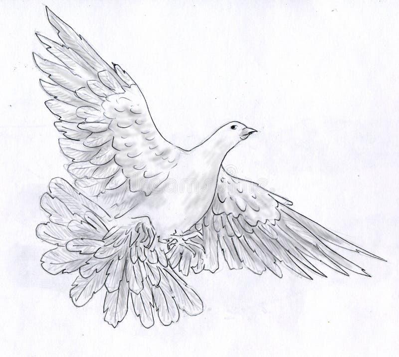 Pomba do branco - esboço do lápis ilustração do vetor