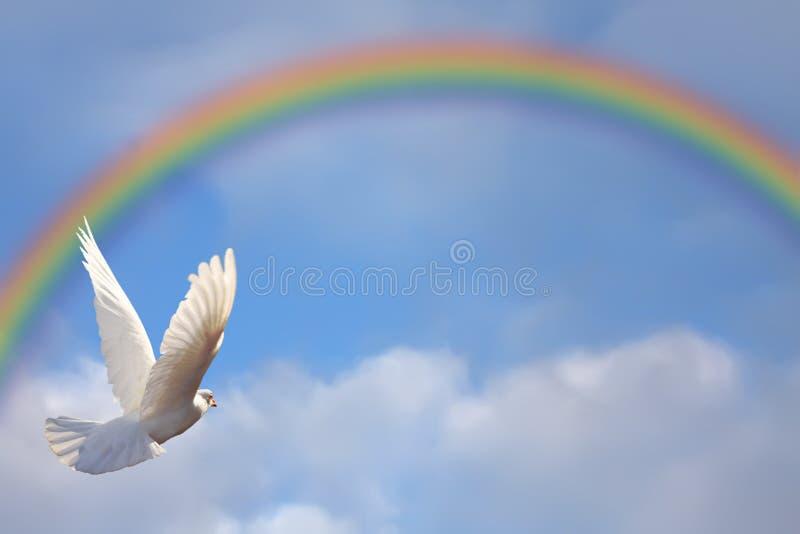 Pomba e arco-íris ilustração do vetor
