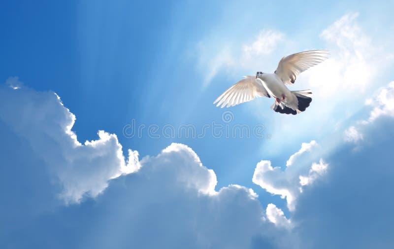 Pomba no símbolo do ar da fé sobre o fundo brilhante foto de stock royalty free