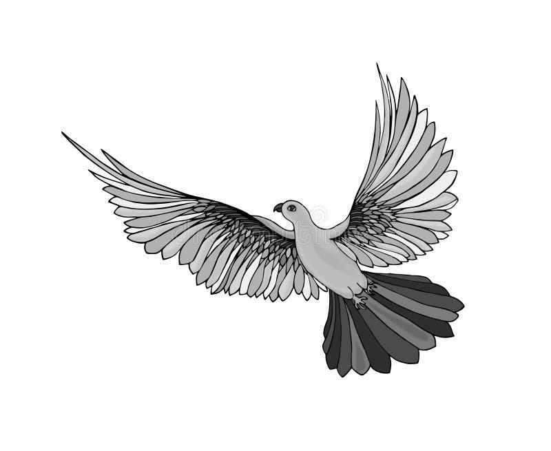 Pomba no voo livre Isolado no fundo branco ilustração stock