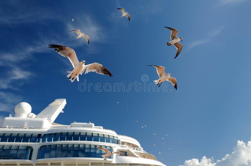 Pombas acima de um navio de cruzeiros imagens de stock royalty free