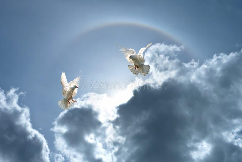 Pombas brancas contra nuvens e arco-íris imagens de stock