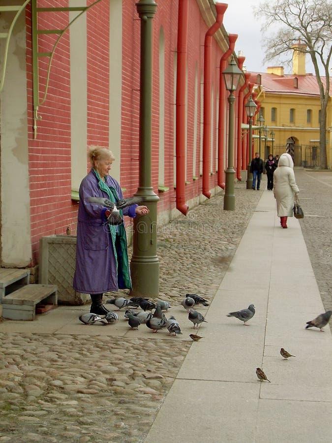 Pombas de alimentação da mulher, St Petersburg fotografia de stock royalty free