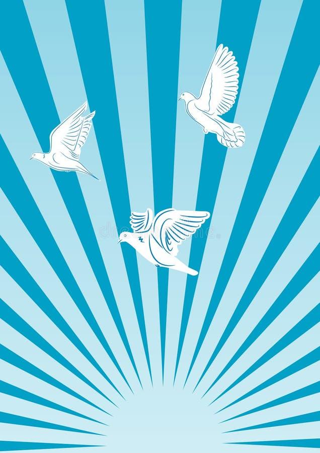 Pombas do vôo no sol. ilustração royalty free