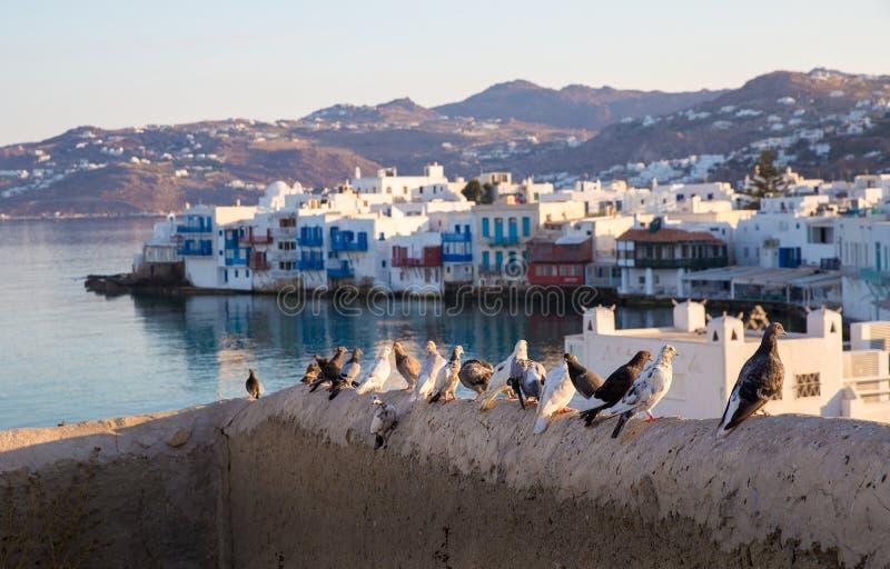 Pombas na ilha grega Mykonos do fundo imagem de stock
