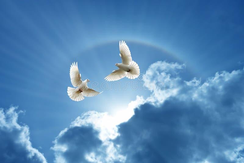 Pombas no símbolo do ar da fé sobre o fundo brilhante fotografia de stock royalty free