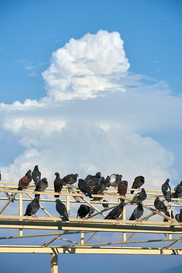 Pombas no telhado do mundo imagens de stock
