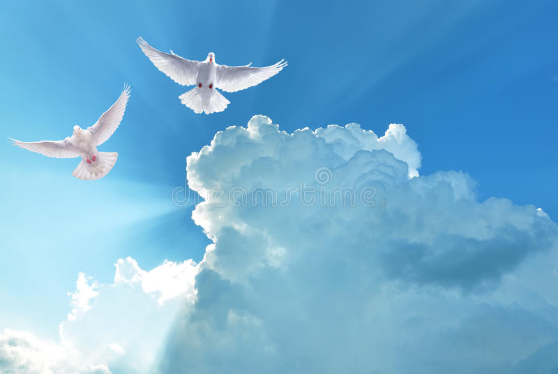Pombas santamente brancas que voam no céu nebuloso imagens de stock royalty free