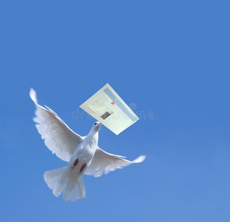 Pombo branco foto de stock