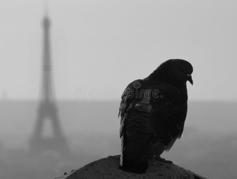 Pombo de Paris, torre Eiffel fotografia de stock royalty free