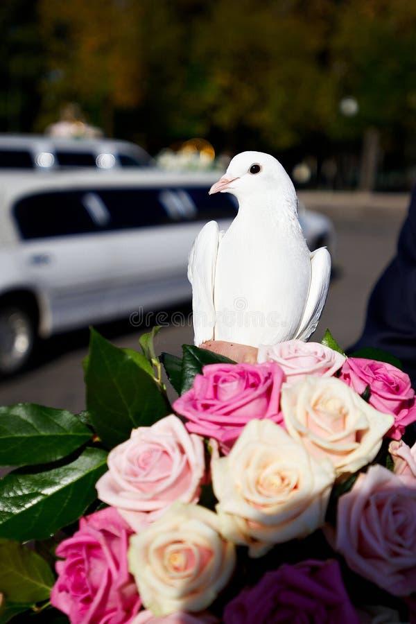 Pombo do casamento felizmente o noivo e a noiva fotos de stock