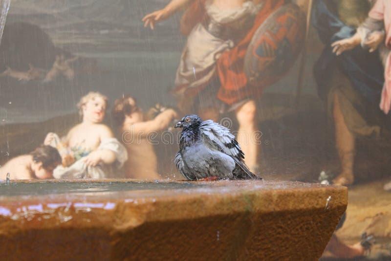 Pombo e parede-pintura de Barcelona fotografia de stock