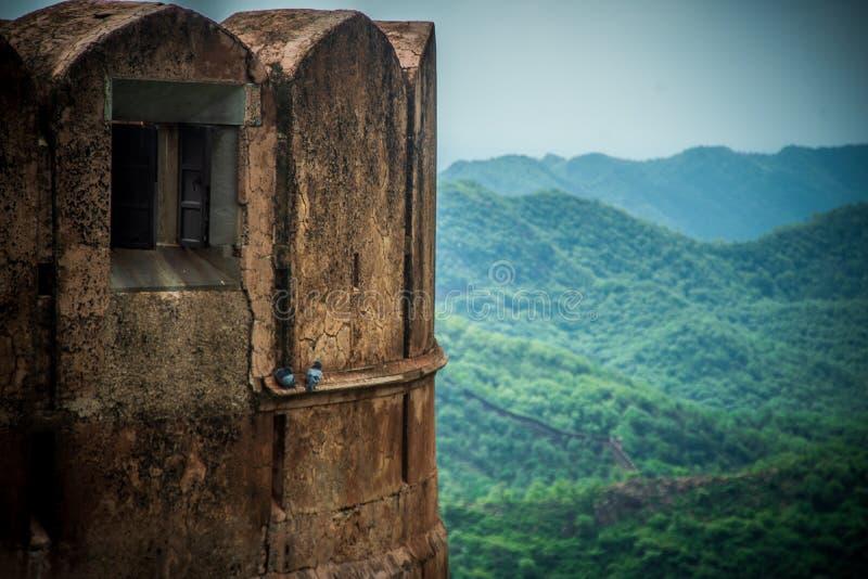 pombo em Jaigarh Fort turista herdado de jaipur fotografia de stock