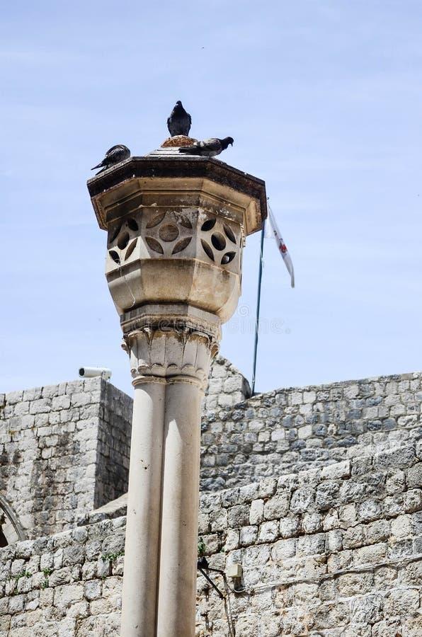 Pombo na coluna na cidade velha de Dubrovnik imagem de stock royalty free