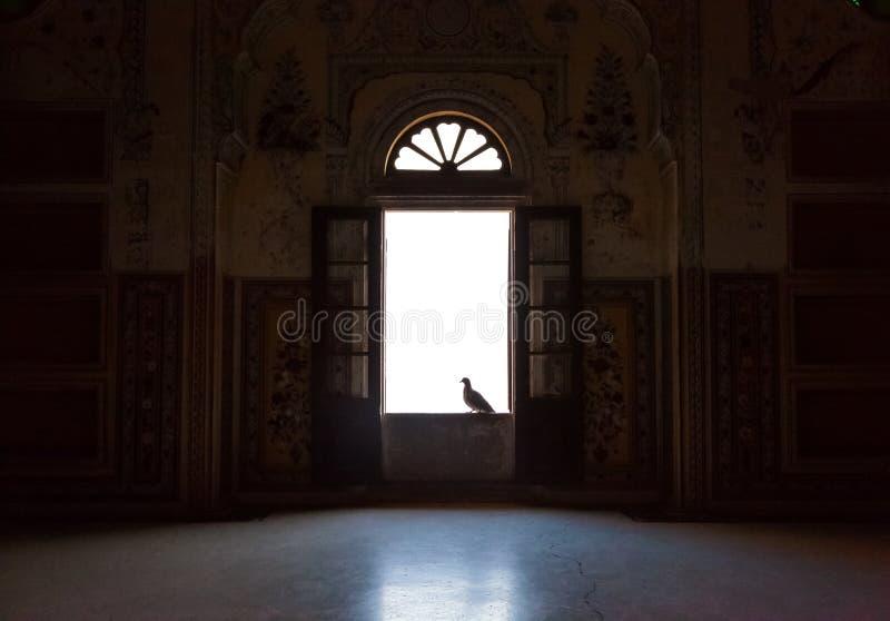 Pombo na janela fotografia de stock royalty free